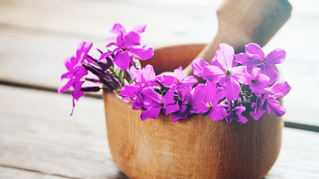 Willow herb for skin care